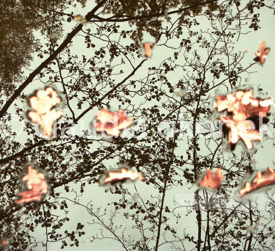 Schwimmende Blätter vom letzten Jahr | Größe: 95 x 105 cm | Kodak, lambda print, AluDibond Schattenfuge, gestrichen.
