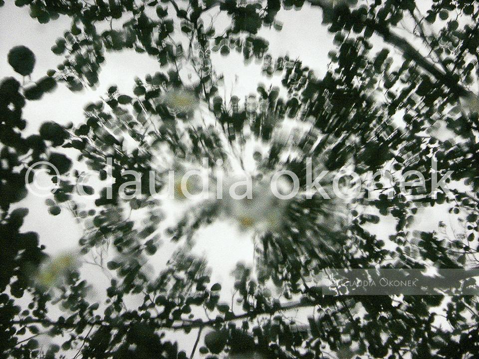 Die Fliege im Wasser | Im Hintergrund Frühlingsblätter im Gegenlicht. |