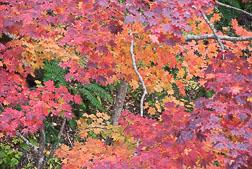 06_439_shikaribetsu-Wald.jpg