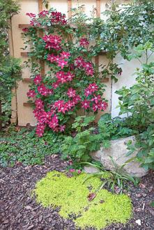 12_Okonek-courtyard2.jpg