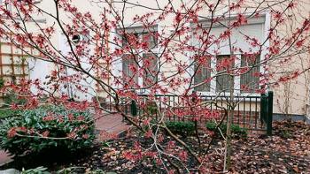 17_Okonek-courtyard2.jpg