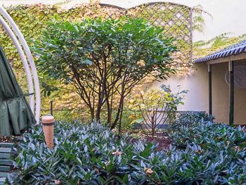 36_Okonek-courtyard2.jpg
