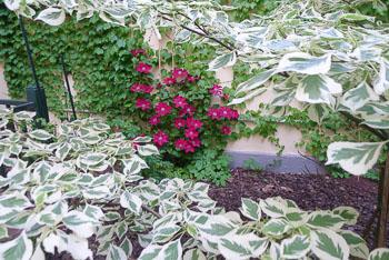 40_Okonek-courtyard_07.jpg