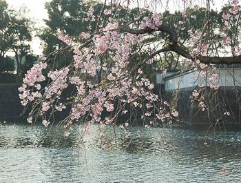 02_Imperial_Palace_Hanami.jpg