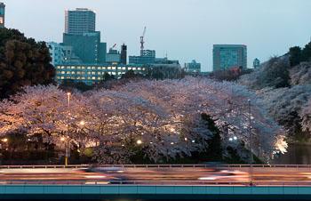 06_57_Kitanomarukoen_Hanami_1.jpg