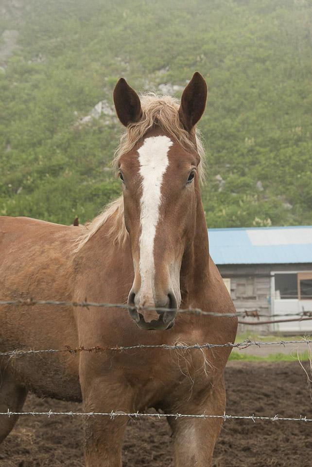 Individuelle Pferdegesichter