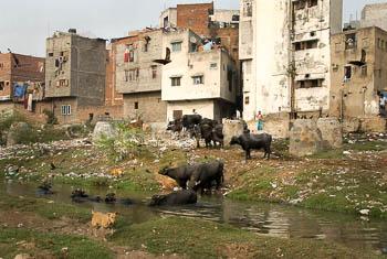 35_Okonek_Delhi_2.jpg